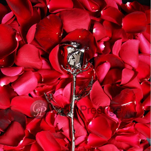 プリザーブドフラワー バラ 1輪 『ゴールドプレスティージ 開店祝い プラチナローズ』 花 薔薇 送料無料 ローズ 24金 バラ プロポーズ 結婚祝い 開店祝い 結婚記念日 ブリザードフラワー プレゼント ギフト 贈り物 送料無料 写真入りメッセージカード, モナーク SHOP:8ea0ade3 --- sunward.msk.ru