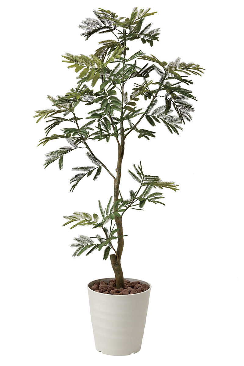 【送料無料】《アートグリーン》《人工観葉植物》光触媒 光の楽園 ねむの木1.55