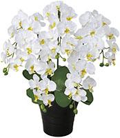 【送料無料】《アートグリーン》《人工観葉植物》光触媒 光の楽園 クイーン胡蝶蘭W
