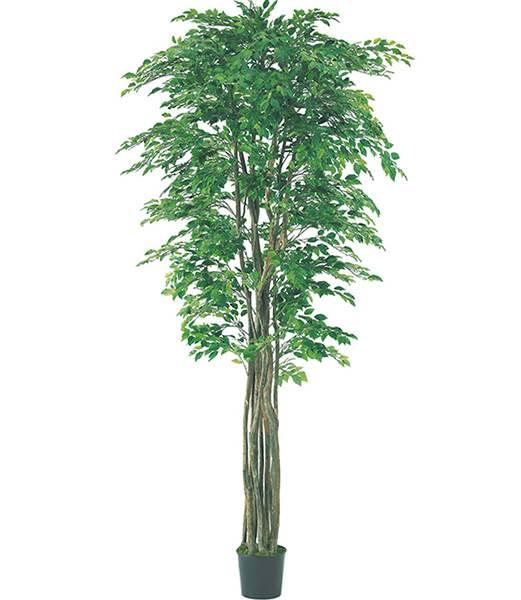 人気 240cm フィカスツリー(ナチュラルトランク) 造花 フラワー 観葉植物 [LETR7594]【フェイク グリーン インテリア 人口観葉植物】, キャラカ 6ec749e7