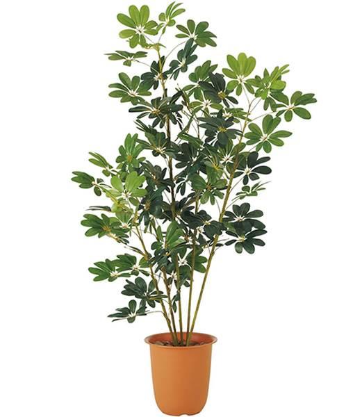 ★造花 観葉植物 180cm カポックツリー [LETR7623]【フェイク グリーン 資材 素材 フルーツ 商品 サンプル】