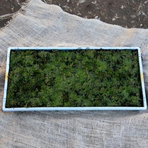 Rhacomitrium 藜 (桑迪苔蘚) 墊 10 件套