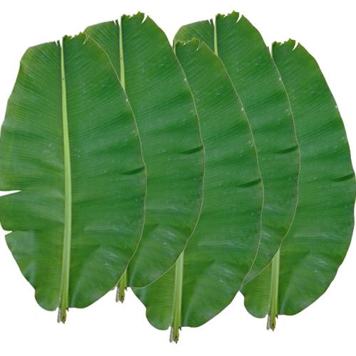 (送料無料) 沖縄県産バナナの葉(5枚)