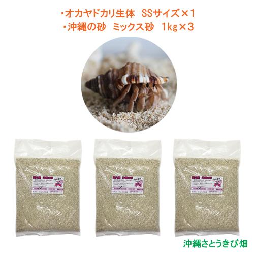 オカヤドカリ生体 新発売 SSサイズ×1匹 1kg×3袋 沖縄の砂 日時指定