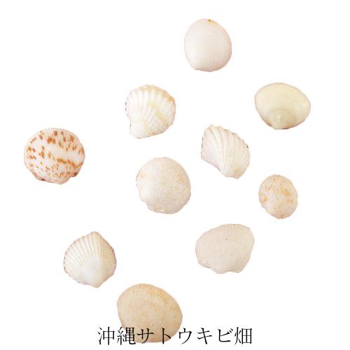 メール便 輸入 ネコポス レジンアート用天然二枚貝 発送商品 販売実績No.1