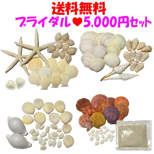 【送料無料】ブライダルに!5000円貝殻セット