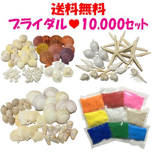 【送料無料】ブライダルに!10000円貝殻セット