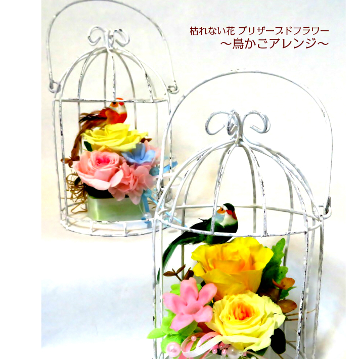 ナチュラルな雰囲気 鳥かごアレンジ 小さな小鳥もついています 誕生日 プレゼント 結婚 記念日 お祝い お見舞いに人気です 結婚祝い 小さなかわいい小鳥付 鳥かご アレンジ ペット供養 お見舞い プリザ ギフト プリザーブドフラワー 卓抜 誕生花 花 花言葉 お供え バラ