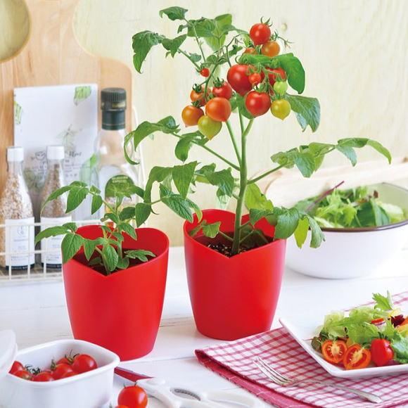 家庭 菜園 ミニ トマト