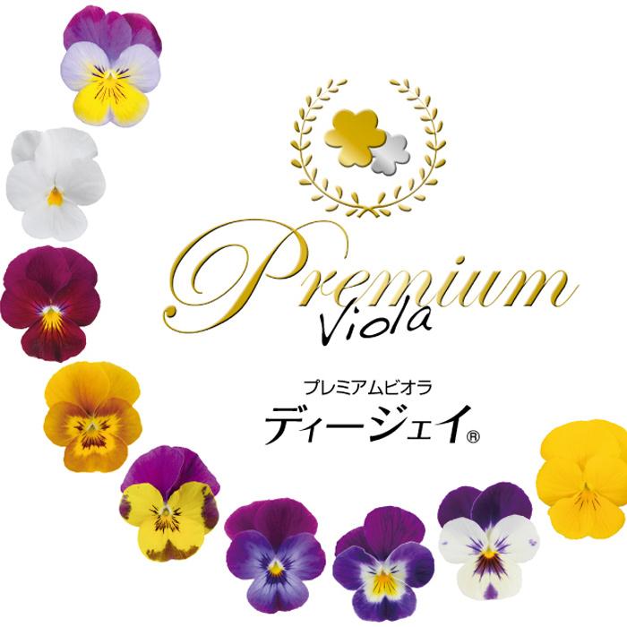 【限定販売ビオラ】プレミアムビオラ ディージェイ 選べる10色 3POTset【DJ】