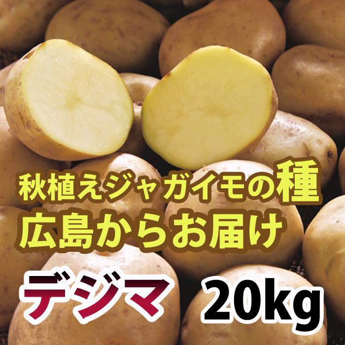 出島(デジマ でじま) ジャガイモ 種芋 20kg【充填時】予約受付!
