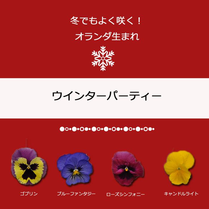 【限定販売ビオラ】プレミアムパンジー ウィンターパーティー 苗 選べる4色 3POTset