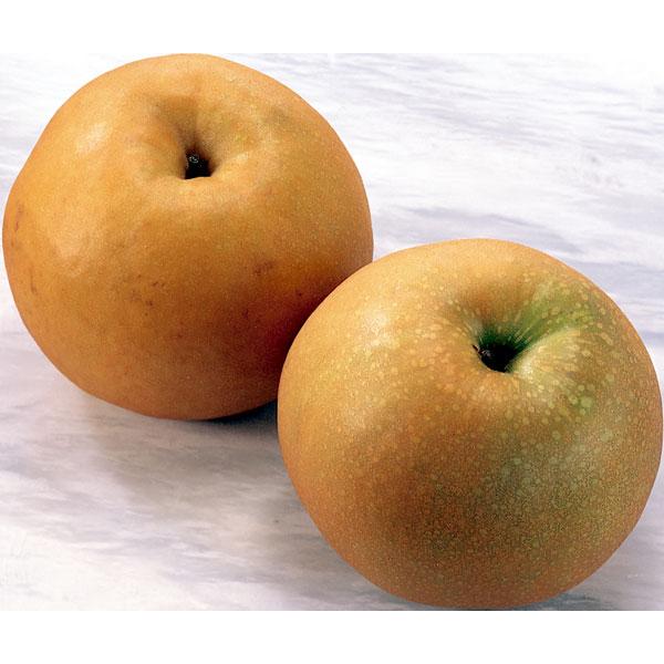肉質はやや粗いですが 香気にも富む高品質な梨です 数量は多 卓越 大きくて見栄えが良く贈答品にも適しています 〈澤光青果〉千葉産 新高梨