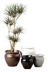 渋めのブラウンが人気です。鉢カバー 陶器 ・ジュネスJ-5 10号鉢用【観葉植物】 観葉植物