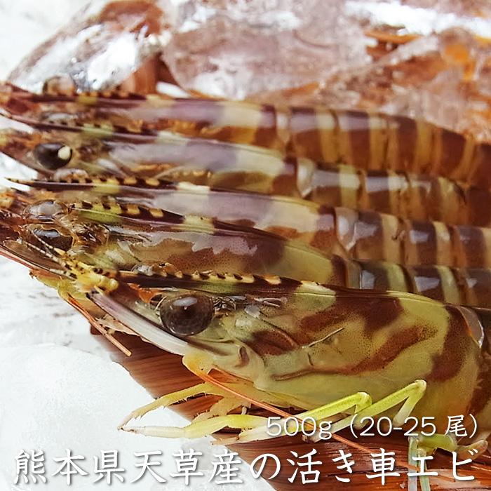 【送料無料】【熊本県天草産の車海老】活き車エビ500g(20-25尾)(冷蔵便もしくは常温便)[メール便・代引き:不可]※年内発送は12月26日までとさせていただいております。