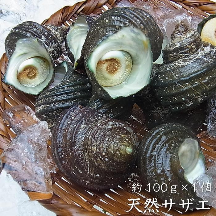 必要な数だけセットに同梱できます!!貝類 天然サザエ約100g×1個(冷蔵便)[メール便:不可]
