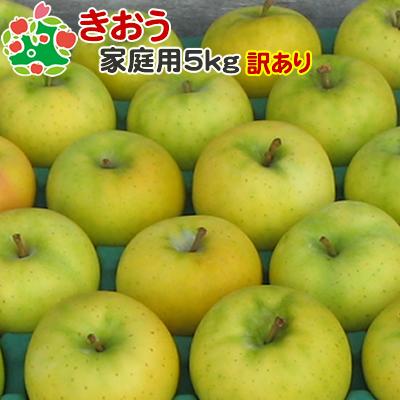 9月上旬収穫 即日出荷 訳あり セール商品 りんご 5kg セール開催中最短即日発送 きおう 青森県産 家庭用キズあり