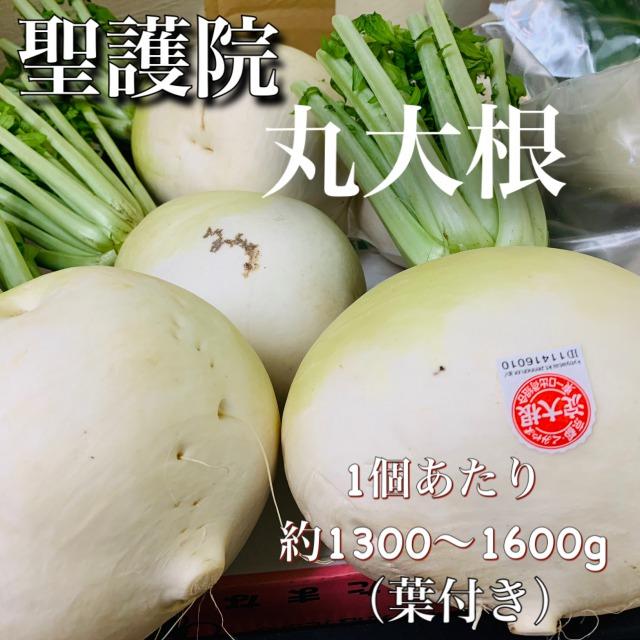 【冬季限定】京都産 聖護院丸大根 Mサイズ1個(葉付き約1300~1600g)※3個・6個まとめ買いの商品ページもございます※
