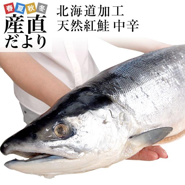 送料無料 北海道より直送 北海道加工 天然紅鮭 <中辛> まるごと1本 1.6キロ以上(ロシア産)紅鮭 べにさけ シャケ 冬ギフト お歳暮