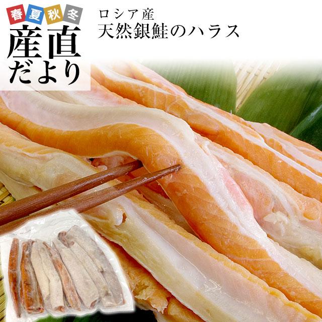 鮭の大とろ とても脂がのっている腹身の部位 メイルオーダー ハラス 贈物 送料無料 希少な腹身の部位 ロシア産 天然銀鮭のハラス 1キロ