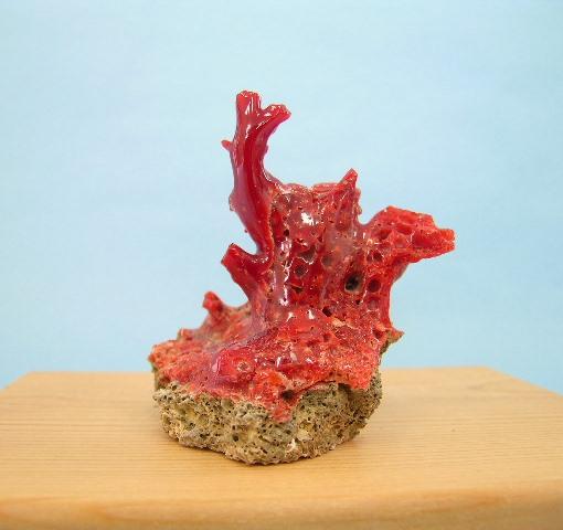 宝石珊瑚の原石 お正月の飾りに 高級 あか 珊瑚の置物 土佐沖産赤珊瑚の拝見 原木 送料無料 半額 新作 smtb-KD 置き物