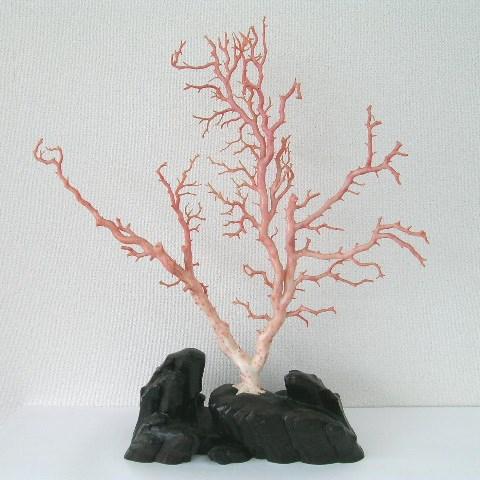 ピンク珊瑚の拝見・置物(艶出し加工済み)/黒檀台/【送料無料】【smtb-KD】