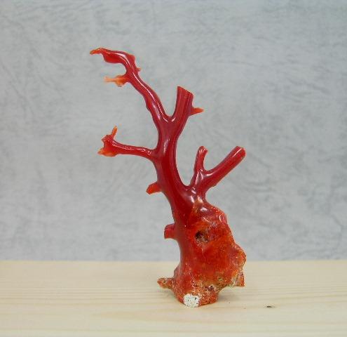 土佐沖産血赤珊瑚の拝見・置き物【送料無料】【smtb-KD】