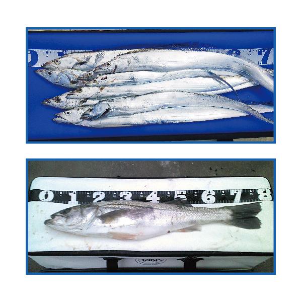 供鹰产业(TAKA SANGYO)776-角青菜使用的冷气设备包100cm(CBOX)(BKBK)(TAP5-201702)