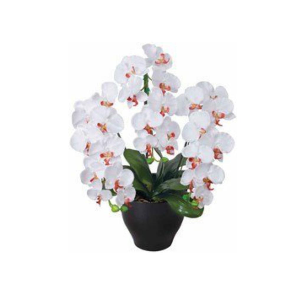 光触媒 人工観葉植物 造花(フェイクグリーン フェイクフラワー)光の楽園 アートフラワー 胡蝶蘭セリースW 22A100お部屋の消臭・抗菌・防汚効果があります。水やり・お手入れ不要置くだけで素敵な癒し空間を演出してくれます。