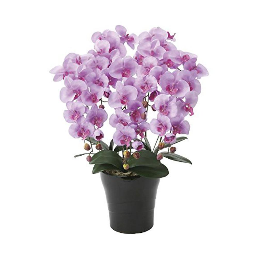 光触媒 人工観葉植物 造花(フェイクフラワー)光の楽園 アートフラワー クイーン胡蝶蘭5本立L 655A150お部屋の消臭・抗菌・防汚効果があります。水やり・お手入れ不要置くだけで素敵な癒し空間約 幅55×奥行45×高さ75cm