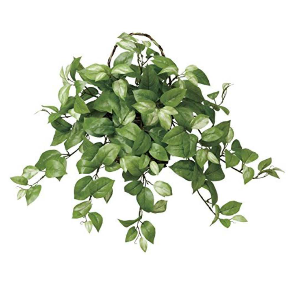 光触媒 人工観葉植物 造花(フェイクグリーン・フェイクフラワー)光の楽園 壁掛けホヤ 268A60お部屋の消臭・抗菌・防汚効果があります。水やり・お手入れ不要置くだけで素敵な癒し空間を演出約 幅54×奥行28×高さ50cm