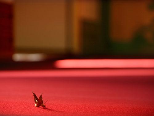 萬葉 毛氈 もうせん サイズ 巾190cm×長さ10メートルcm 厚み 3mm 赤 紺 金茶 紫 緑 5色から防炎加工 防虫加工 ウール100% ウールマーク 新毛を使った高級毛氈 音楽会 クリスマス ハロウィン