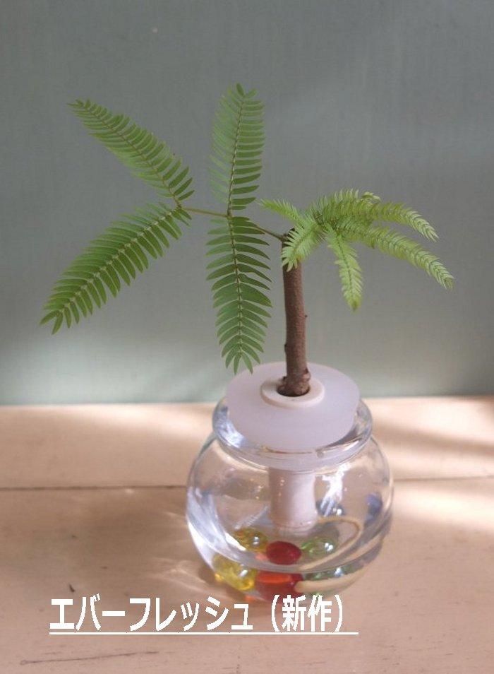 Mini plants セラハイト ball bin always clean, green everywhere