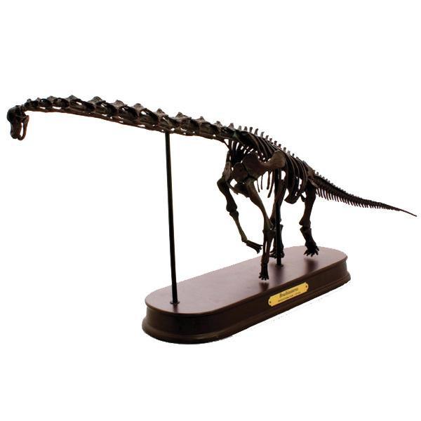 ブラキオサウルス スケルトンモデル FDS603/BR(70103) 細部まで緻密に再現された骨格標本フィギュア!