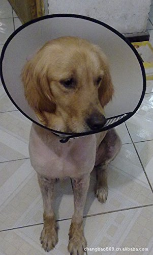送料無料 傷口をなめて悪化させるのをやさしく防ぎます 即納送料無料 ワンちゃんのエリザベスカラー 全7サイズ:大型犬から小型犬 です LL 首周り36-38cm 幅18cm 開店記念セール 全7サイズ 中型犬 犬ペット用エリザベスカラーソフトタイプ ロング ドーナッツ 猫 大型犬 ソフト 小型犬 sealche