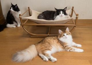 キャットハンモック 猫ハンモック 猫ベッド キャットベッド ペットベッド ねこ用ハンモック 猫用品 オリジナルハンモック 猫 窓 ハンモック 猫用ハウス にゃんベッド おしゃれ ペットハウス カバーは何度でも洗えます ハウス