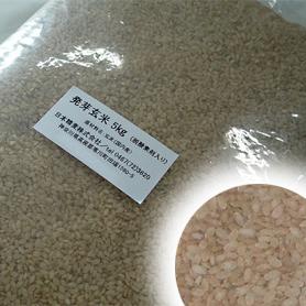 マイナスイオン製法で炊き上がりふっくら 発芽玄米 ついに入荷 定番の人気シリーズPOINT ポイント 入荷 簡易包装で格安 1kg