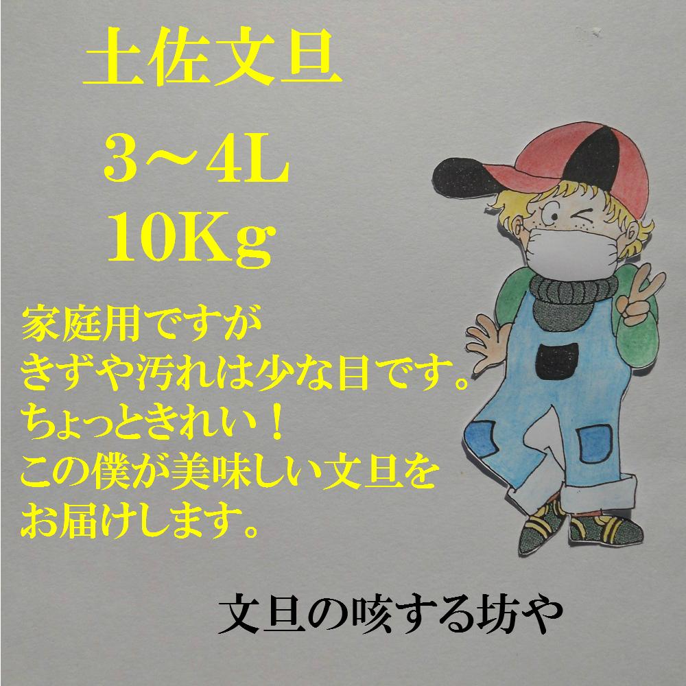 【送料無料】訳あり高知産土佐文旦大玉3L〜4L約10Kg家庭用
