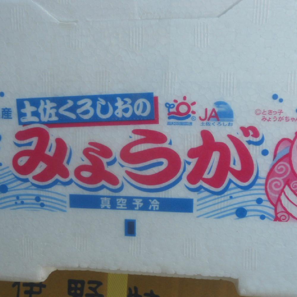 【送料無料】高知産ハウスみょうが約1Kgただし北海道沖縄は、送料500円のご負担お願いします。