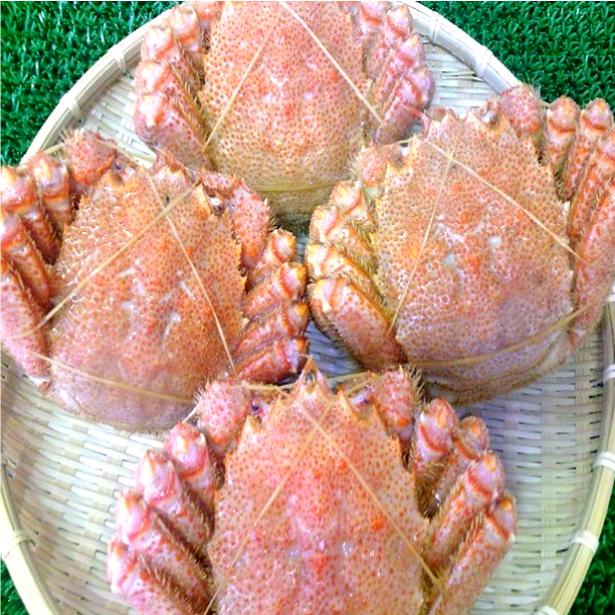 ◆送料無料◆北海道◆極上ボイル毛がに特大約650g×4尾セット【05P03Dec16】
