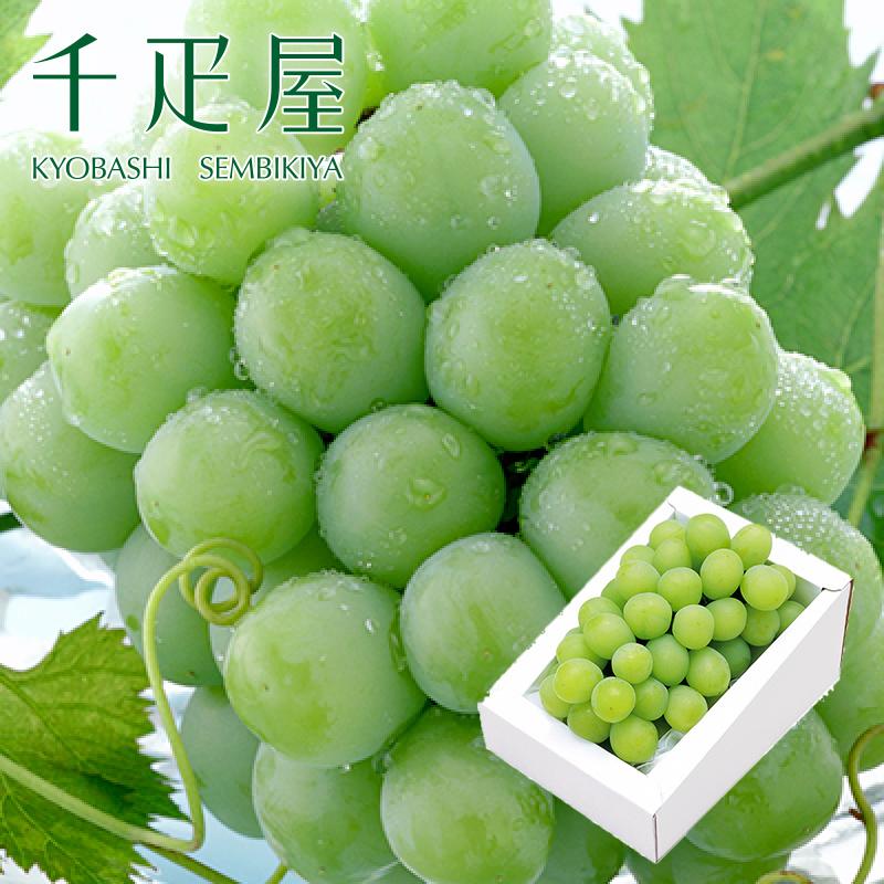 京橋千疋屋 マスカット・オブ・アレキサンドリア 1房入 【クール便(冷蔵)】