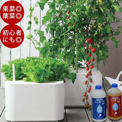 耕栽培キット ホームハイポニカ MASUCO (マスコ)水耕栽培 シンプル 果菜 葉菜 両用 簡単 野菜 栽培 かわいい