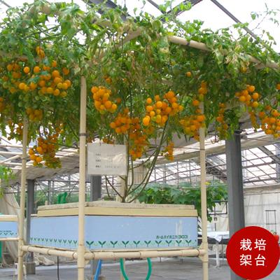 巨木トマト栽培用架台 水耕栽培で本格的に栽培したい方