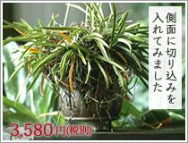 新作 風蘭専用鉢 陶翠 植木鉢 4号 高級品 風蘭鉢 青交趾 雲足メッシュ