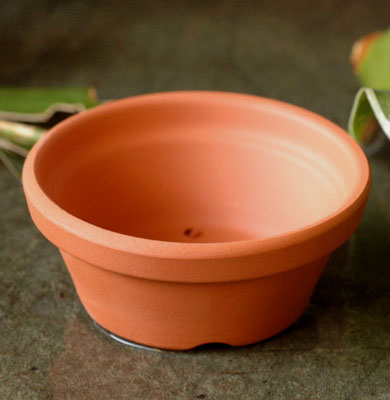 素焼 植木鉢 2.5号 テラコッタ 朱温鉢 浅型 超特価 直送商品