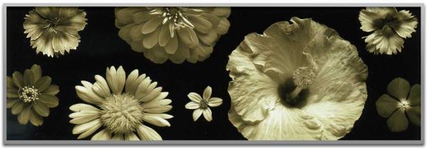 《アートフレーム》jk driggs/Garden Spots