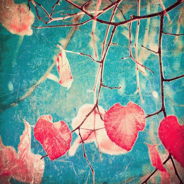 Andrekart Photography/Autumn Pink Heart Leafs on blue textured sky