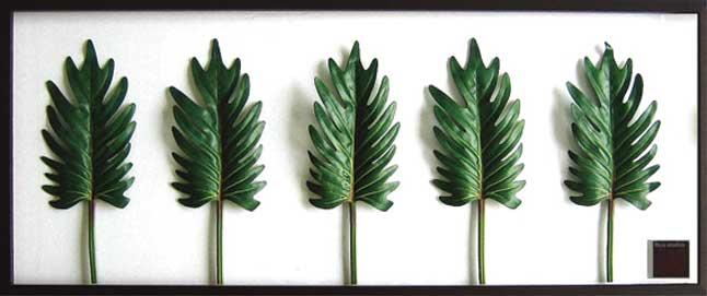 F-Style Frame Philodendron cv.kookaburra ≪リーフパネル≫ エフスタイルフレーム フィロデンドロン クッカバラ