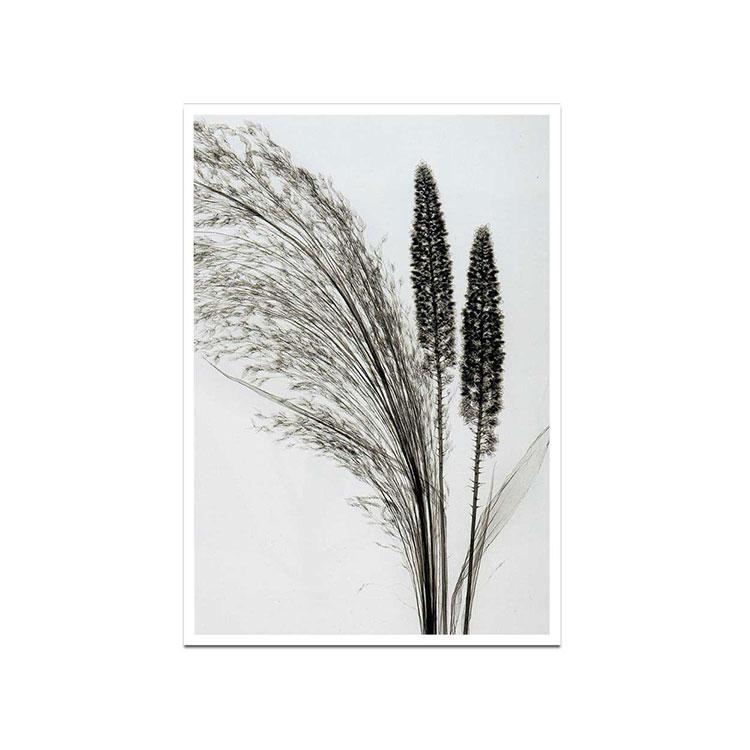 《アートフレーム》Steven N.Meyers Broom Grass(スティーブン・マイヤーズ エニシダ草)
