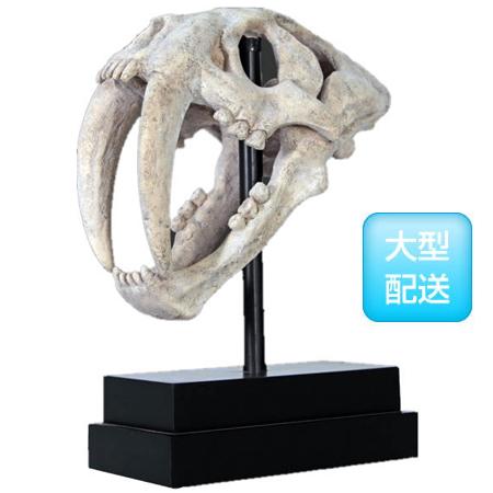 サーベルタイガーの頭骨【CARUNA】